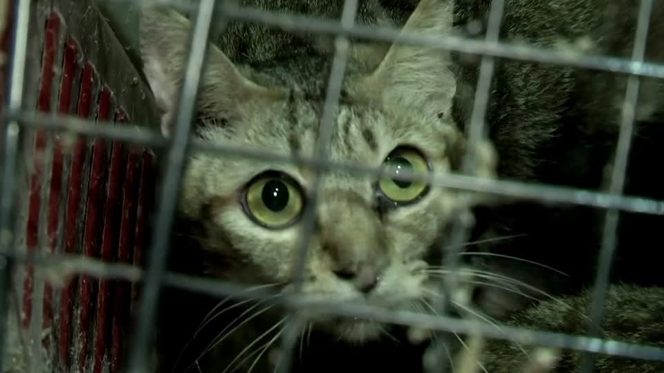 Over 300 abandoned cats rescued in Thailand