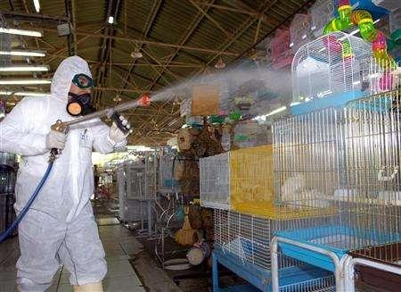 Kuwait finds H5N1 bird flu in chicken, falcon | Reuters com