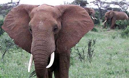 eBay condemned for allowing rampant ivory trade | Reuters com