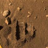 <p>Il punto da cui è stato prelevato il campione di terriccio del pianeta Marte dal braccio robotico di Phoenix, ripreso dal Surface Stereo Imager del Phoenix Mars Lander (Nasa), l'8 giugno 2008. REUTERS/NASA/JPL-Caltech/University of Arizona/Texas A&M University/Handout (Usa)</p>