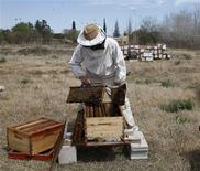 <p>Patricio Crespo, a beekeeper, works at an apiary farm in the town of Chivilcoy, some 100 miles (160 km) from Buenos Aires, September 22, 2008. Beekeepers had it easy when cattle roamed freely across the flower-filled meadows of Argentina's Pampas plains. But a boom in soy farming has changed all that. Picture taken September 22, 2008. REUTERS/Enrique Marcarian</p>