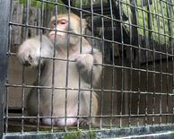 <p>A Formosa Macaque sits inside its cage at the Pingtung Rescue Center for endangered Wild Animals in Pingtung, southern Taiwan October 17, 2008. REUTERS/Ralph Jennings</p>