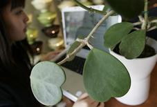 "<p>A woman looks at a blog of a potted plant named ""Midori-san"", meaning ""green"" in Japanese, during a photo opportunity at a cafe in Kamakura, near Tokyo October 21, 2008. REUTERS/Yuriko Nakao</p>"