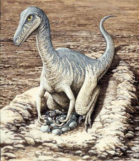 Los Papas Dinosaurios Custodiaban Y Empollaban Los Huevos Reuters El dinosaurio tiene problemas de espalda. los papas dinosaurios custodiaban y