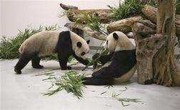 <p>Tuan Tuan and Yuan Yuan, the two giant pandas from China, are seen in the quarantine area at Taipei zoo in Muzha December 23, 2008. The Panda bears are a goodwill gift from Beijing and the latest sign of improving ties between the political rivals. REUTERS/Taipei City Government/Handout</p>