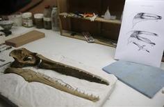 <p>Restos del cráneo de un ave gigante que vivió hace unos 10 millones de años en el museo de Historia Natural de Lima, 27 feb 2009. Paleontólogos hallaron en Perú restos del cráneo de un ave gigante que vivió hace unos 10 millones de años, en una zona considerada ahora como cementerio de animales prehistóricos, dijo el viernes un investigador. REUTERS/Mariana Bazo (PERU)</p>