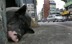 <p>Свинья спит на улице в Тайбэе 24 мая 2008 года. Тайваньский фермер выдрессировал 12 диких свиней бежать за своим мотороллером и соблюдать правила дорожного движения, останавливаясь на красный сигнал светофора. REUTERS/Pichi Chuang</p>