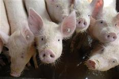 <p>Поросята на ферме в китайской провинции Хубэй 29 апреля 2009 года. Испуганное быстрым распространением нового вируса свиного гриппа, руководство многих мировых аэропортов сочло нужным оборудовать их температурными сканерами для выявления зараженных пассажиров, но пока микробы оказываются умнее современных технологий. REUTERS/Stringer</p>