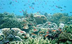 <p>Un'immagine della barriera corallina in Papua Nuova Guinea. EDITORIAL USE ONLY REUTERS/ARC COE for Coral Reef Studies/Marine Photobank/Handout (PAPUA NEW GUINEA)</p>