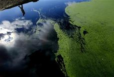 <p>Farmer John Ive inspects a dam on his property at Dicks Creek, located 35 kilometers (22 miles) northwest of Canberra, that has been effected by blue-green algae, also known also as Cyanobacteria, June 4, 2007. REUTERS/David Gray</p>
