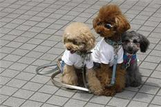<p>Perros vestidos y con lentes de sol en una fiesta para perros en Tokio, 13 jun 2009. Uno de los mayores centros para animales de Japón está pidiendo donantes de sangre caninos para aportar a los perros un cuidado excelente. Japón es una nación loca por los perros y cuenta con más de seis millones de canes registrados como mascotas. Muchos suponen una compañía para el creciente número de personas mayores y a menudo sustituyen a los niños en una de las naciones con una tasa de natalidad más baja. REUTERS/Toru Hanai</p>