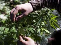 <p>Плантация конопли в Буэнос-Айресе 21 августа 2009 года. Примерно 166 миллионов людей по всему миру хотя бы один раз в жизни пробовали марихуану, а некоторые из них курят травку постоянно, говорится в исследовании австралийских ученых, основанном на данных Управления ООН по наркотикам и преступности. REUTERS/Enrique Marcarian</p>