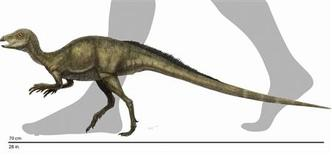 <p>Illustration shows a reconstruction of the Fruitadens haagarorum, the smallest dinosaur ever discovered in North America, released by the Natural History Museum of Los Angeles County in Los Angeles, October 21, 2009. REUTERS/Reconstruction by Doyle Trankina, NHM Dinosaur Institute/Handout</p>