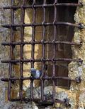 <p>Голубь сидит на решетке федеральной тюрьмы в Вольтерре, Италия 16 мая 2008 года. Сицилийский строитель попросился в тюрьму, чтобы дома избежать ссоры с женой, сообщают итальянские СМИ. REUTERS/Chris Helgren</p>
