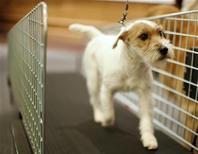 <p>Cane su un tapis roulant predisposto per l'attività fisica dei cani da un albergo di New York. Foto d'archivio. REUTERS/Carlo Allegri</p>
