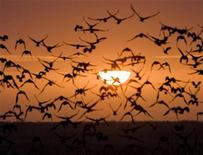 <p>Стая улетающий птиц, город Кызылорда, Казахстан, 27 марта 2009 год. Тысячи жителей Алма-атинской области Казахстана эвакуированы из-за наводнения, есть жертвы, сообщила пресс-служба министерства по чрезвычайным ситуациям (МЧС) в пятницу. REUTERS/Shamil Zhumatov</p>