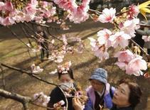 """<p>Visitors take a close look at blooming """"Ookanzakura"""" cherry blossoms at Shinjuku park in Tokyo March 18, 2010. REUTERS/Yuriko Nakao</p>"""