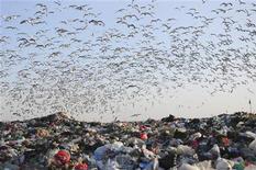 <p>Чайки над свалкой в городе Далянь 12 января 2010 года. Пекин объявил войну запахам, исходящим от постоянно увеличивающихся свалок, установив более 100 пушек, распыляющих дезодорирующие вещества над ними. REUTERS/China Daily</p>
