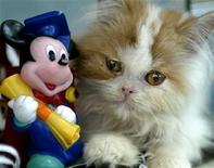 <p>Imagen de archivo de un pequeño gato junto a una figura del ratón Mickey, en Amman, Jordan. Jun 14 2005. REUTERS/Ali Jarekji /ARCHIVO</p>