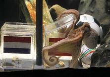 <p>Paul le poulpe, l'oracle le plus célèbre d'Allemagne, a prédit la victoire de l'Espagne contre les Pays-Bas en finale de la Coupe du monde de football. Il n'a mis que trois minutes pour ouvrir la boîte de nourriture ornée du drapeau espagnol, au cours d'un rituel retransmis en direct à la télévision allemande, espagnole et néerlandaise. /Photo prise le 9 juillet 2010/REUTERS/Wolfgang Rattay</p>