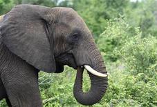 <p>Les agriculteurs dont les récoltes sont saccagées par des animaux sauvages, comme les éléphants, devraient se servir de spray au piment pour les disperser, suggère la FAO, l'Organisation des Nations unies pour l'alimentation et l'agriculture. /Photo d'archives/REUTERS/Mike Hutchings</p>