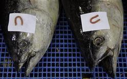 <p>Tuna fish are displayed at main fish market in Sao Paulo, October 27, 2007. REUTERS/Paulo Whitaker</p>