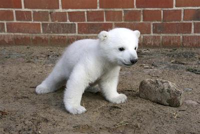 Farewell Knut