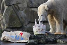 """<p>Popular polar bear Knut picks out fish from his """"birthday cake"""" made of frozen fruit and fish on his third birthday in the zoo in Berlin, December 5, 2009. REUTERS/Thomas Peter</p>"""