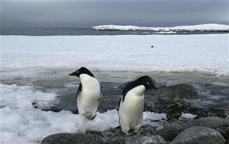 Two Adelie penguins rest on the shores of Commonwealth Bay in Antarctica December 13, 2009. REUTERS/Pauline Askin