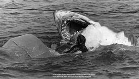 <p>The mechanical shark mauls Hollywood Stuntman Ted Grossman for the estuary attack scene---September 1974. REUTERS/Edith Blake</p>