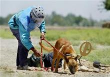 <p>An Afghan sapper searches for anti-tank mines with the help of a sniffer dog in Bagram valley, near the coalition joint task force base, 50 kms (31 miles) north of Kabul, June 29, 2003.REUTERS/Arko Datta</p>