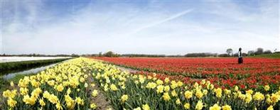 <p>A woman has her picture taken in a Dutch tulip field in this stitched photo, consisting of nine separate photos taken in sequence, in Noordwijk April 24, 2010. Thijs Zonneveld dreams of an artificial mountain 5 km wide and between 1 and 2 km in height, which would surpass the world's tallest man-made building, the 828-meter high Burj Khalifa skyscraper in Dubai. REUTERS/Michael Kooren</p>