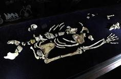 <p>One of the two Sediba skeletons is displayed at the University of the Witwatersrand in Johannesburg September 8, 2011. REUTERS/Stringer</p>