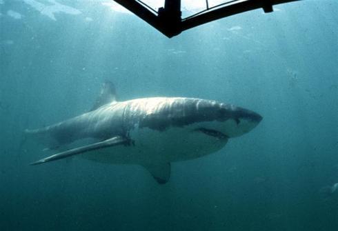 Sharks: Predators or victims?