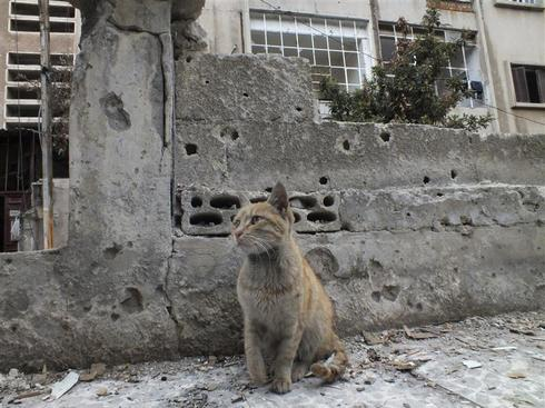 Syria's displaced animals