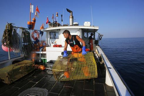 Trapping lobster