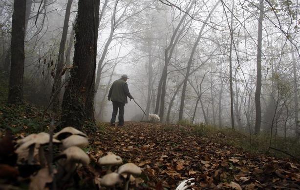 66岁的松露猎人Ezio Costa于2013年11月9日在意大利西北部Alba附近的Monchiero树林中与他的狗Jolly一起寻找松露.Costa的家人已经为四代松露猎人。 REUTERS-Stefano Rellandini