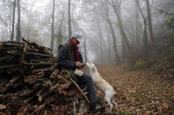 66岁的松露猎人Ezio Costa在2013年11月9日意大利西北部Alba附近Monchiero的树林中检查了他的狗Jolly发现的松露.REUTERS-Stefano Rellandini