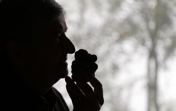 66岁的松露猎人Ezio Costa在2013年11月9日在意大利西北部Alba附近Monchiero的餐厅闻到一块松露.REUTERS-Stefano Rellandini