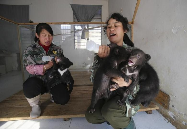 Breeders feed black bear cubs at a zoo in Kunming, Yunnan province, March 20, 2014. REUTERS/Stringer