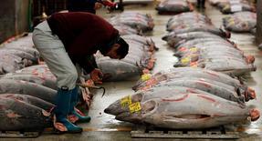Imagen de archivo de un vendedor mayorista revisando atunes en el mercado de alimentos Tsukiji en Tokio, ene 5 2013. Los precios mayoristas de Japón crecieron un 4,4 por ciento interanual en mayo, mostraron el miércoles datos del Banco de Japón. REUTERS/Toru Hanai