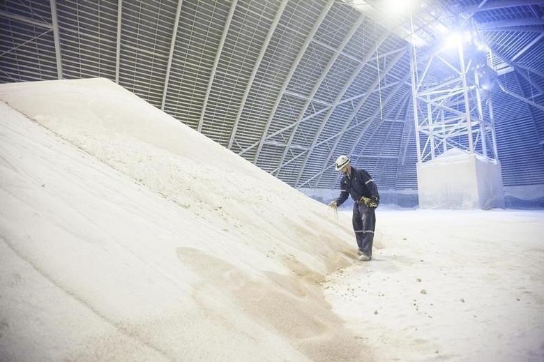 Chris McKay, PotashCorp load-out supervisor at the Cory Mine, examines potash inside one of the storage facilities near Saskatoon, Saskatchewan October 10, 2013.   REUTERS/David Stobbe
