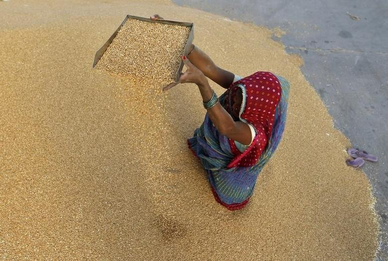 A woman winnows wheat crop at a wholesale grain market on the outskirts of Ahmedabad May 7, 2013. REUTERS/Amit Dave/Files