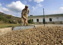 En la imagen, un trabajador recoge granos de café secos en una plantación en Pueblo Bello, en la provincia de Cesar. 29 de enero de 2014. REUTERS/Jose Miguel Gomez. La agencia Moody's Investors Service subió el lunes la calificación soberana de Colombia a Baa2 desde Baa3, por expectativas de un sólido crecimiento de largo plazo y un manejo fiscal que ha permitido déficit fiscales moderados.