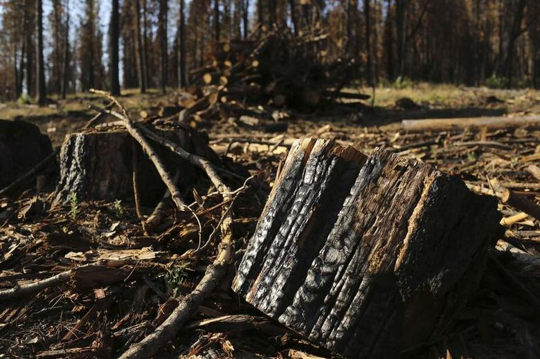 Plan to sell burned California trees sends sparks...