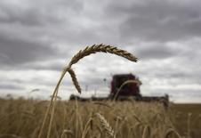 Колос пшеницы на поле близ Астаны 10 сентября 2013 года. Казахстан, крупнейший производитель зерна в Центральной Азии, может экспортировать 6-8 миллионов тонн зерна в 2014-2015 маркетинговом году, несмотря на то, что прогноз урожая остается невысоким, сказал представитель министерства сельского хозяйства в среду. REUTERS/Shamil Zhumatov