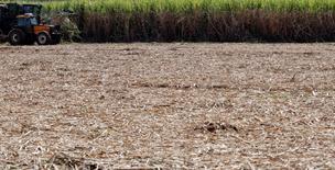 """Imagen de archivo de una cosechadora combinada en un cañaveral de Cossan en Piracicaba, Brasil, jul 29 2010. La producción de azúcar en el centro sur de Brasil subió a fines de agosto porque las trituradoras procesaron la mayor cantidad de caña para una quincena de la temporada, dijo la industria de caña de azúcar """"Unica"""" el martes. REUTERS/Nacho Doce"""
