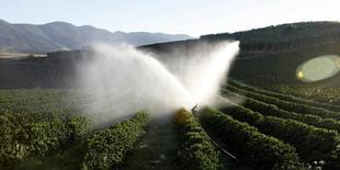 As exportações de café verde do Brasil em setembro somaram 2,63 milhões de sacas de 60 kg, aumento de 9,6 por cento na comparação com o mesmo mês do ano passado. REUTERS/Paulo Whitaker