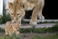A lioness plays with her cub at the zoo in Sarajevo October 10, 2014.  REUTERS/Dado Ruvic