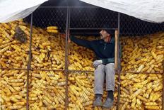 Un hombre ordena un montón de maíz en Optasi-Magura, en el sur de Romania. Imagen de archivo, 23 octubre, 2014. El Consejo Internacional de Granos (CIC) elevó el jueves en 1 millón de toneladas su pronóstico para la cosecha global de trigo del 2014/15 a un récord de 718 millones de toneladas, y dijo que está previsto que la demanda global aumente con fuerza. REUTERS/Bogdan Cristel